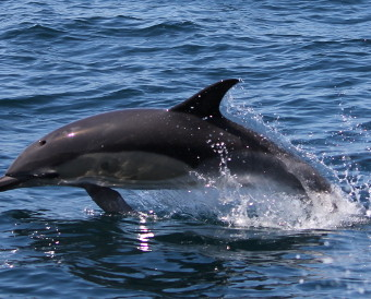 Delfine k