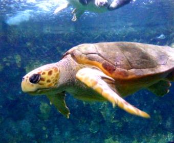 Zwei bemitleidenswerte Insassen des Aquariums