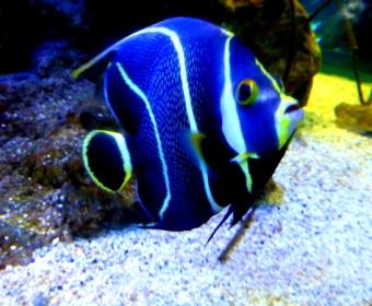 Aquarium k2