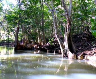 Indian River IV