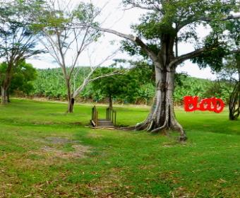 Fondation Clement, Martinique