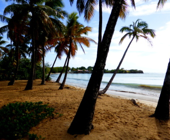 Martinique Grand Anse de Salines