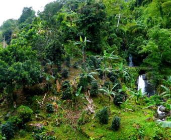 Blue Mountains, Jamaika