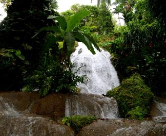 Shaw Botanical Gardens, Ocho Rios, Jamaika