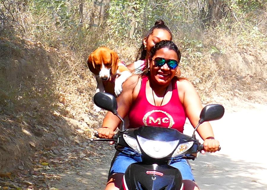 Moto-Taxifahrt mit Hund