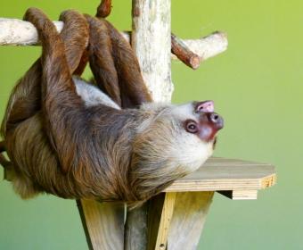 Gamboa Wildlife Rescue Center