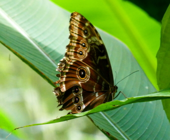 Gamboa Wildlife Rescue Center, Schmetterlingshaus